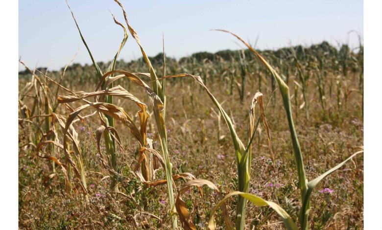 SUSZA 2019 - odbiór protokołów suszowych