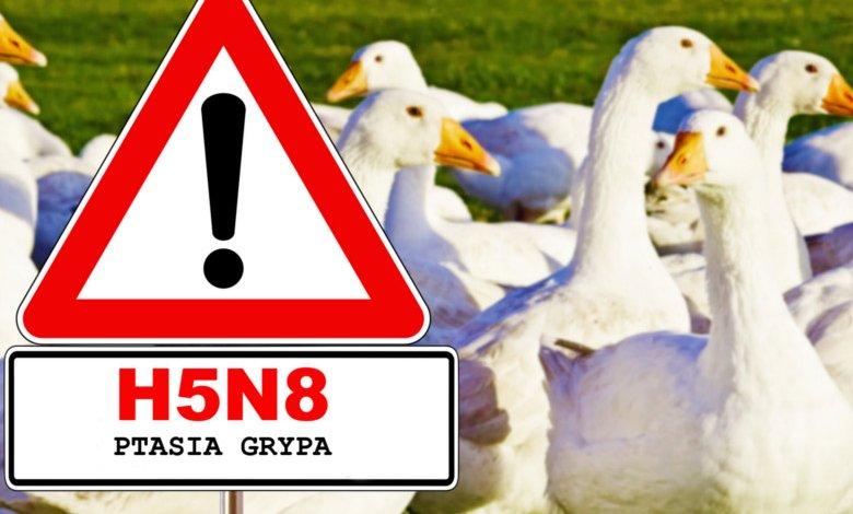 Ptasia grypa - zasady, których trzeba przestrzegać w celu ochrony gospodarstwa